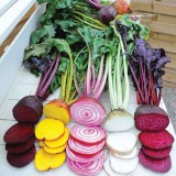 Beetroot 'Rainbow Mix'