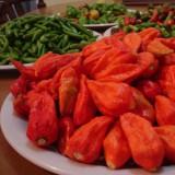 Pepper Bhut Jolokia Red
