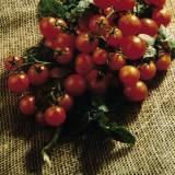 Tomato 'Balconi Red' ™