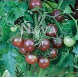 Tomato 'Black Cherry' ™