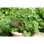 Salad Leaf Stir Fry ™