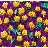 Viola hybrida 'Miniola Heart Purple' ™