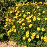 Bidens 'Pirates Goldmine'