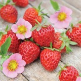 Strawberry 'Just Add Cream'